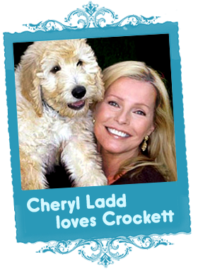 Cheryl Ladd with a Loveable Labradoodle